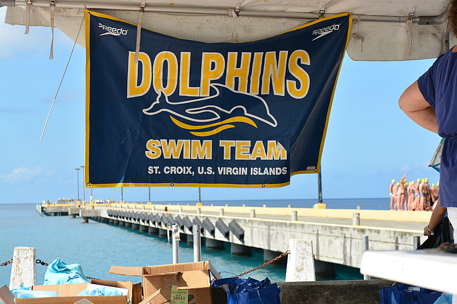 Dolphins Banner